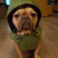 oliver jacket hoodie