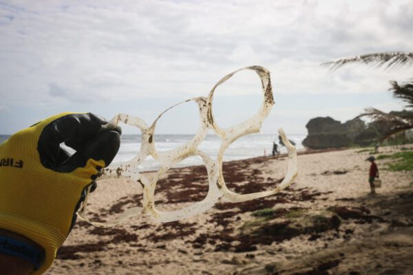 Plastic schildpad gevaar