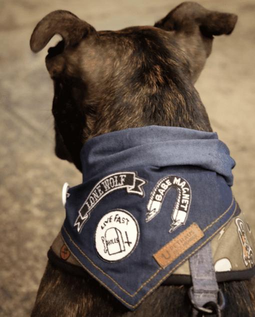 Bulldog bandana back
