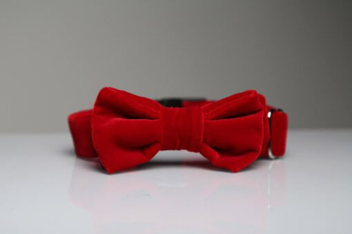 Holy bow tie
