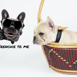 interieursticker-bulldog-talk-frenchie