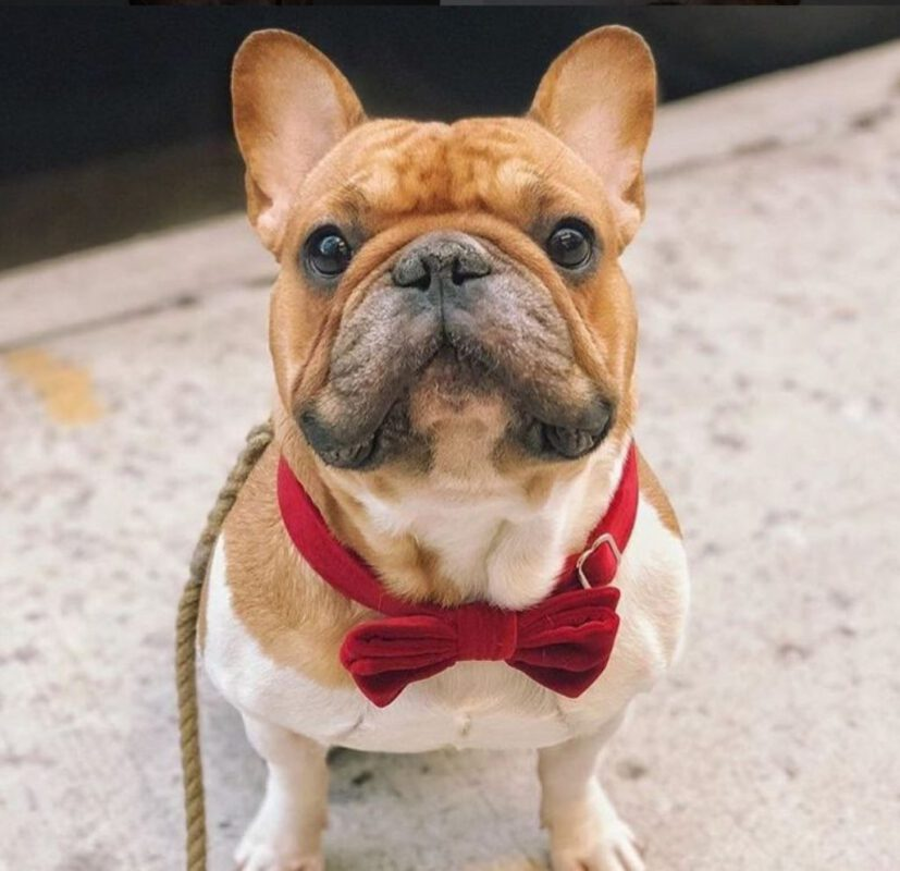bow tie rope