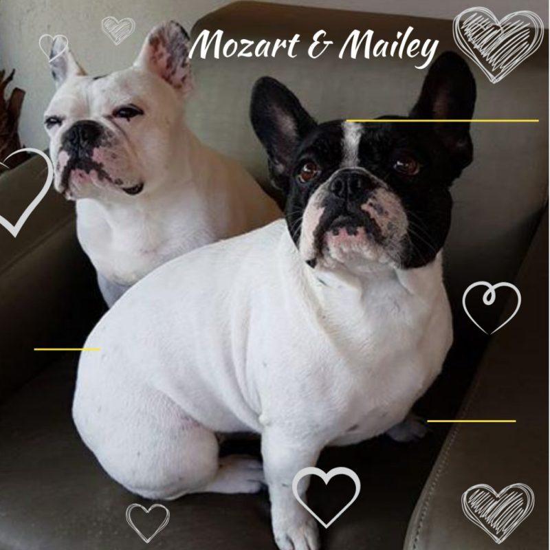 Mozart en Mailey
