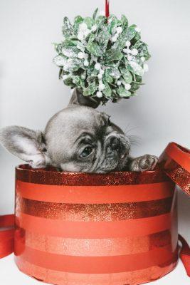 bulldog cadeau