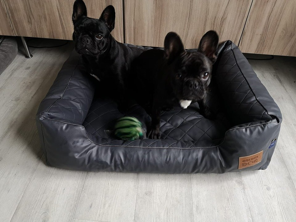 Jaxx en Pipa in Steppy hondenmand