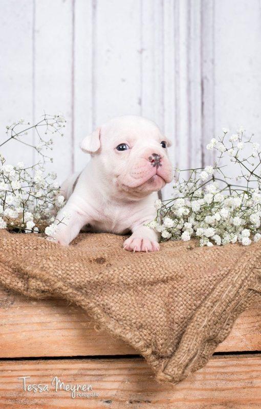 Zelda puppy